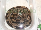 i-love-reptiles-2013-lidia-a-053