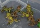 i-love-reptiles-2013-lidia-a-056