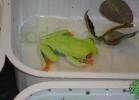 i-love-reptiles-2013-lidia-a-057