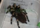 i-love-reptiles-2013-lidia-a-058