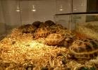 i-love-reptiles-aprile-2016-008