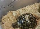i-love-reptiles-aprile-2016-022