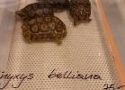 i-love-reptiles-aprile-2016-025