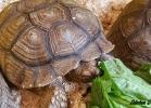 i-love-reptiles-aprile-2016-034