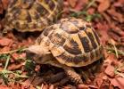 i-love-reptiles-marzo-2014-004
