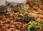 i-love-reptiles-marzo-2014-005