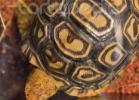 i-love-reptiles-marzo-2014-008