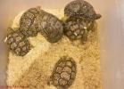 i-love-reptiles-marzo-2014-009
