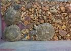 i-love-reptiles-marzo-2014-013