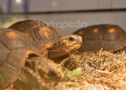 i-love-reptiles-marzo-2014-015