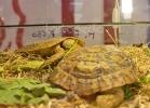 i-love-reptiles-marzo-2014-017