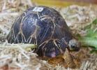 i-love-reptiles-marzo-2014-019