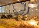 i-love-reptiles-marzo-2014-020