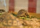 i-love-reptiles-marzo-2014-021