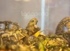 i-love-reptiles-marzo-2014-024