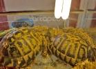 i-love-reptiles-marzo-2014-026