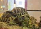 i-love-reptiles-marzo-2014-027