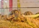 i-love-reptiles-marzo-2014-028