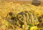 i-love-reptiles-marzo-2014-029