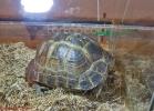i-love-reptiles-marzo-2014-030