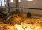 i-love-reptiles-marzo-2014-031
