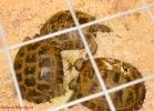 i-love-reptiles-marzo-2014-033