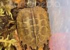 i-love-reptiles-marzo-2014-037