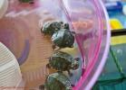 i-love-reptiles-marzo-2014-040