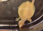 i-love-reptiles-marzo-2014-043