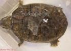 i-love-reptiles-marzo-2014-044