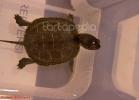 i-love-reptiles-marzo-2014-046