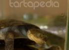 i-love-reptiles-marzo-2014-051