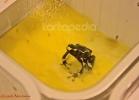 i-love-reptiles-marzo-2014-054