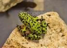 i-love-reptiles-marzo-2014-056