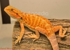 i-love-reptiles-marzo-2014-058
