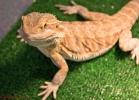 i-love-reptiles-marzo-2014-059
