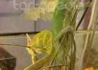 i-love-reptiles-marzo-2014-060