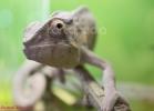 i-love-reptiles-marzo-2014-061