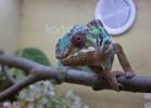 i-love-reptiles-marzo-2014-062