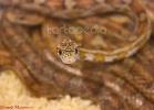 i-love-reptiles-marzo-2014-065