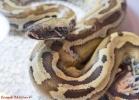 i-love-reptiles-marzo-2014-066