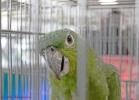 i-love-reptiles-marzo-2014-072