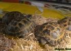 i-love-reptiles-marzo-2015-020