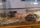 i-love-reptiles-marzo-2015-021