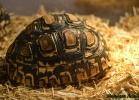 i-love-reptiles-marzo-2015-023