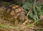 i-love-reptiles-marzo-2015-024