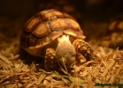 i-love-reptiles-marzo-2015-025