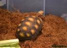 i-love-reptiles-marzo-2015-028
