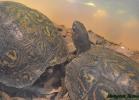 i-love-reptiles-marzo-2015-030