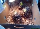 i-love-reptiles-marzo-2015-041